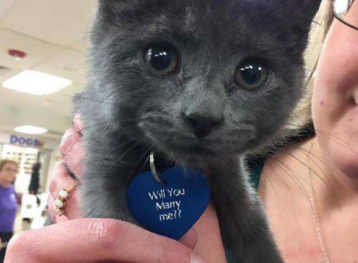 proposta di matrimonio con un gattino