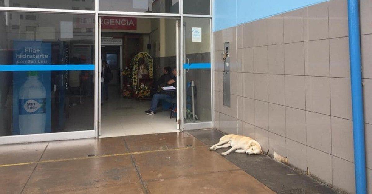 ramses-il-cane-che-aspettava-davanti-allospedale