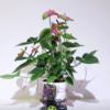 elowan-pianta-cyborg