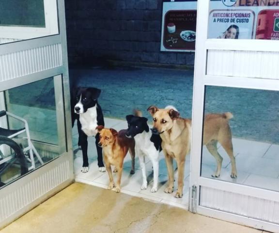 senzatetto-cani
