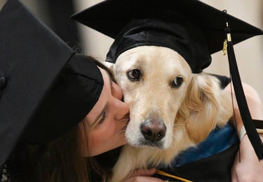 laurea-ad-honorem-al-cane