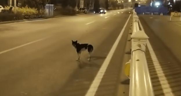 il-cane-che-aspetta-ogni-giorno-la-sua-amica-umana-morta 2