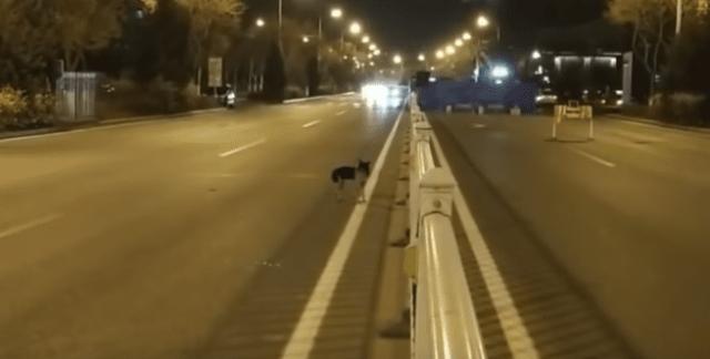 il-cane-che-aspetta-ogni-giorno-la-sua-amica-umana-morta 3