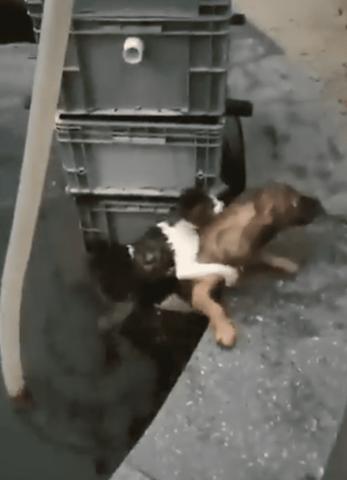 il-cane-salva-la-vita-del-gatto-in-pericolo 2