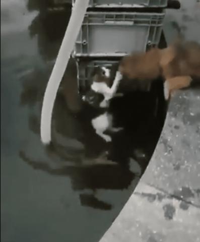 il-cane-salva-la-vita-del-gatto-in-pericolo 1
