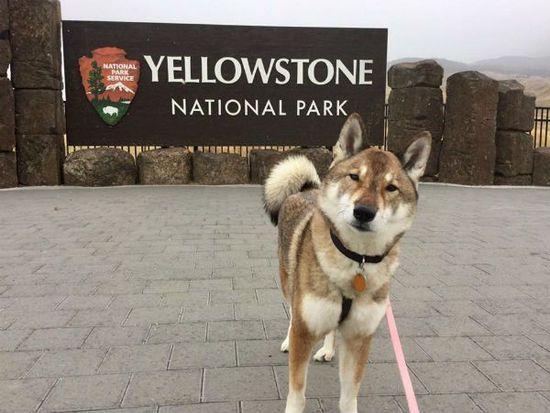 Yellowstone-Park-mura