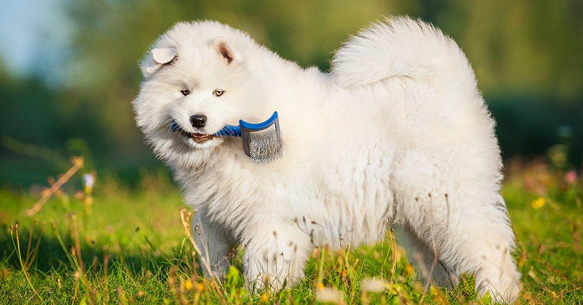 8 motivi che spingono un cane ad abbaiare