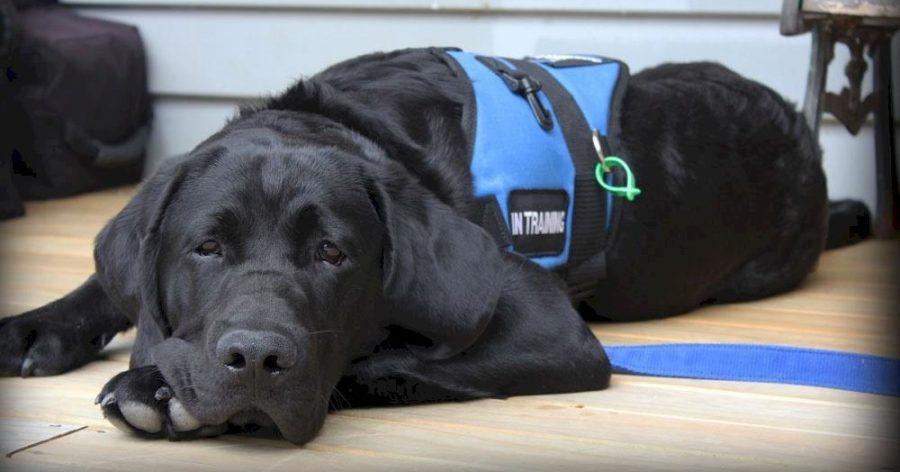 cane d'assistenza