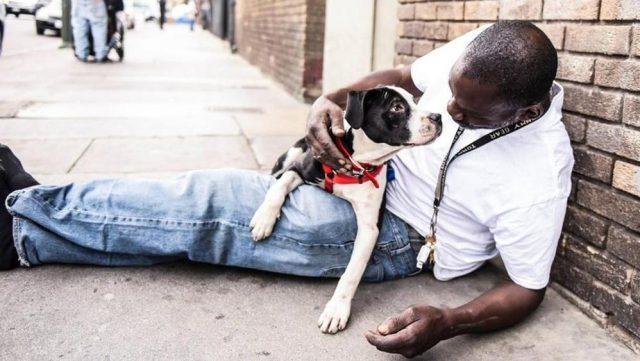 il-legame-tra-i-cani-ed-il-senzatetto 1