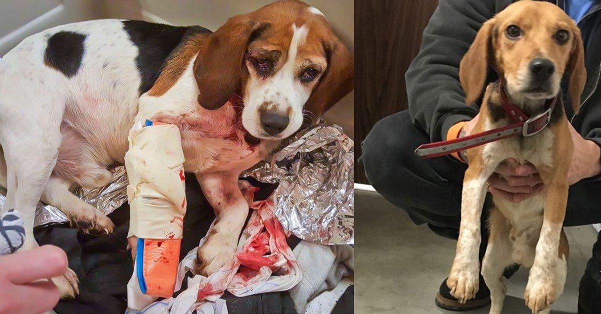 Due cani scaraventati in strada da un'auto, salvati da un camionista