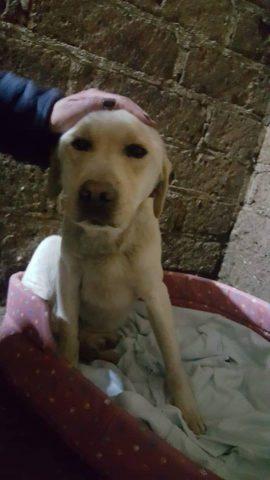 cane-Trasacco