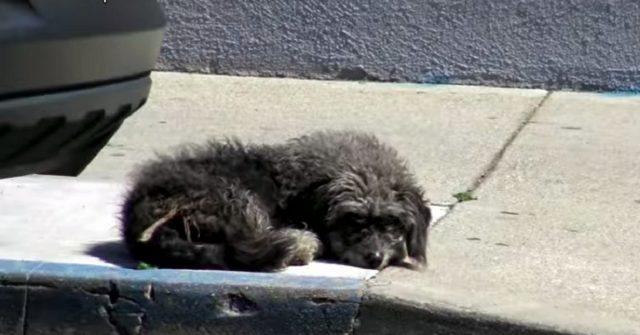 cane-abbandonato-dormiva-sul-marciapiede-in-attesa-che-qualcuno-lo-salvasse