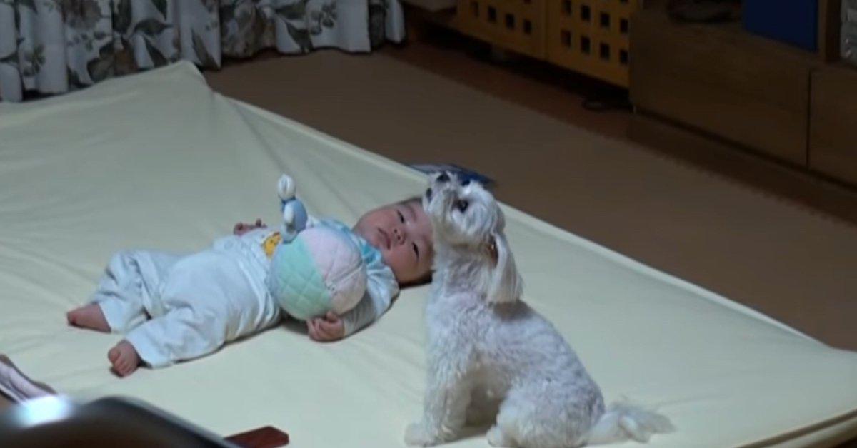 Cucciolo calma il pianto di un bambino. Il video sta facendo il giro del mondo