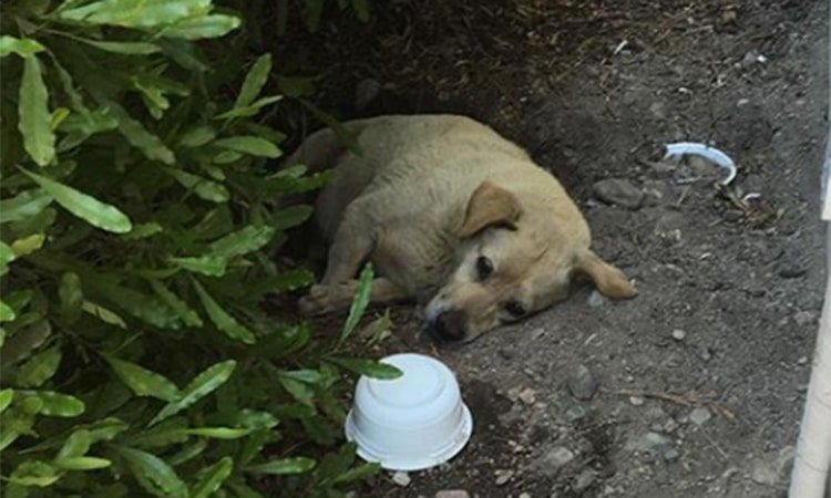 cane che viveva nel fango