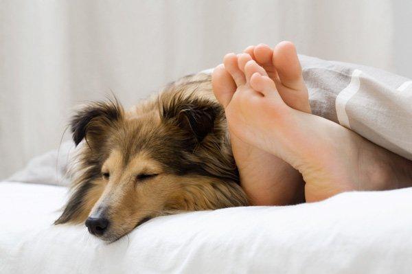 cane-donna-letto