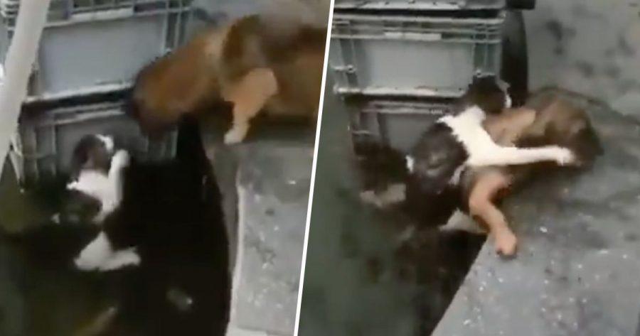 cane salva gatto che sta per affogare