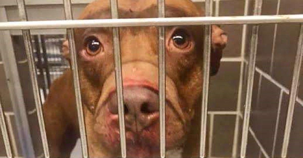 cane-vittima-di-bullismo-il-proprietario-chiede-di-sopprimerlo