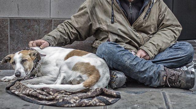 il-legame-tra-i-cani-ed-il-senzatetto 2