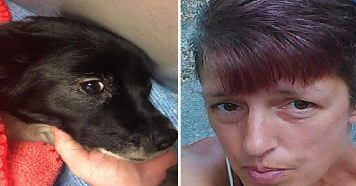 Chihuahua salva padrona dall'attacco di un orso