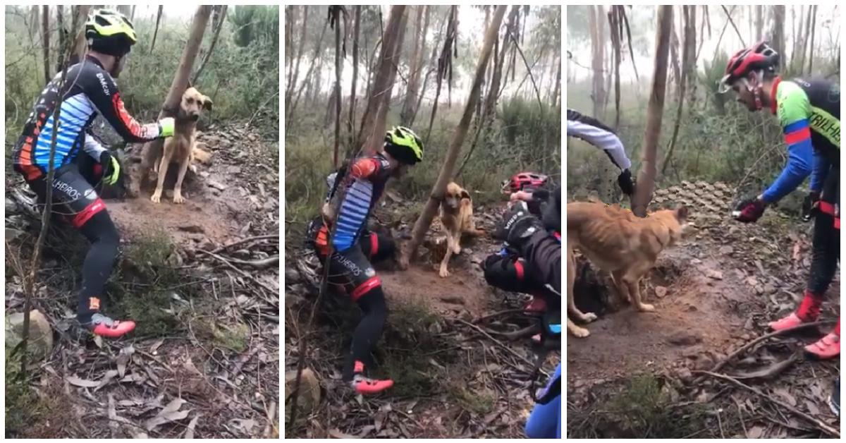 Ciclisti salvano un cane legato nel bosco