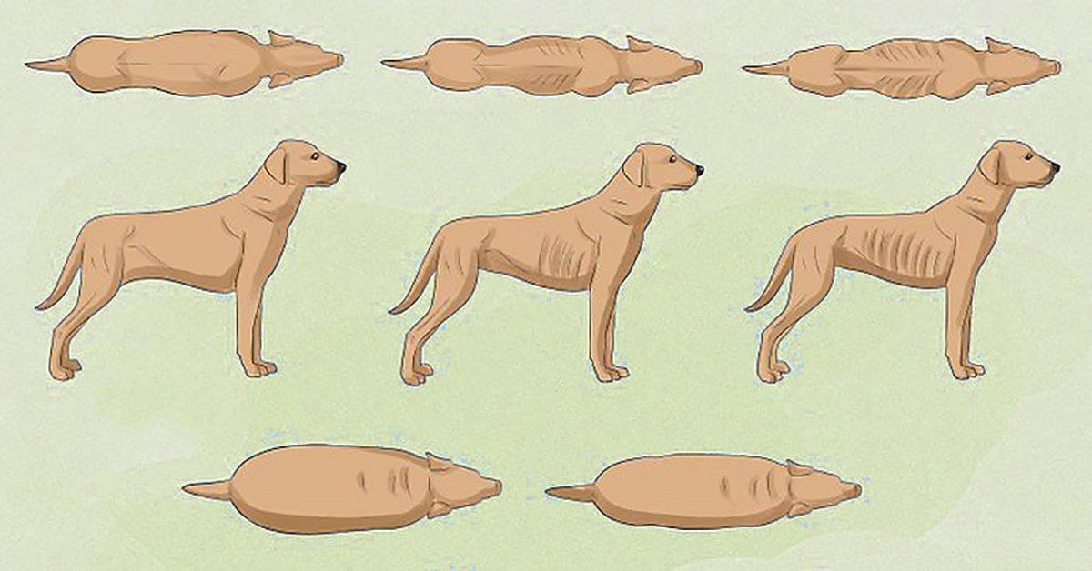 come-scoprire-se-il-tuo-cane-potrebbe-perdere-la-vita-da-giovane