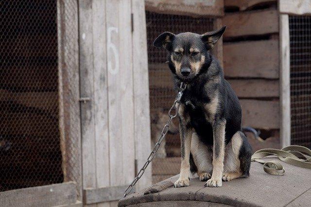 crudeltà verso gli animali