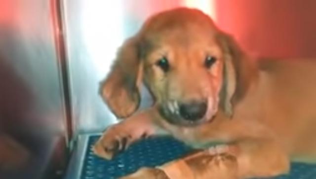 cucciolo-ventimiglia