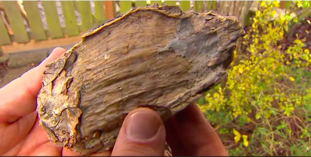 fossile-trovato-dal-cane
