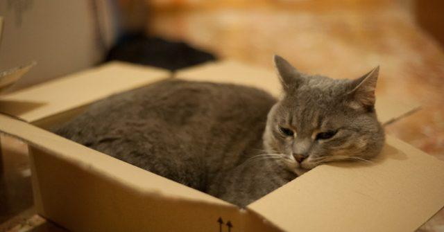 Perché i gatti vanno pazzi per le scatole?