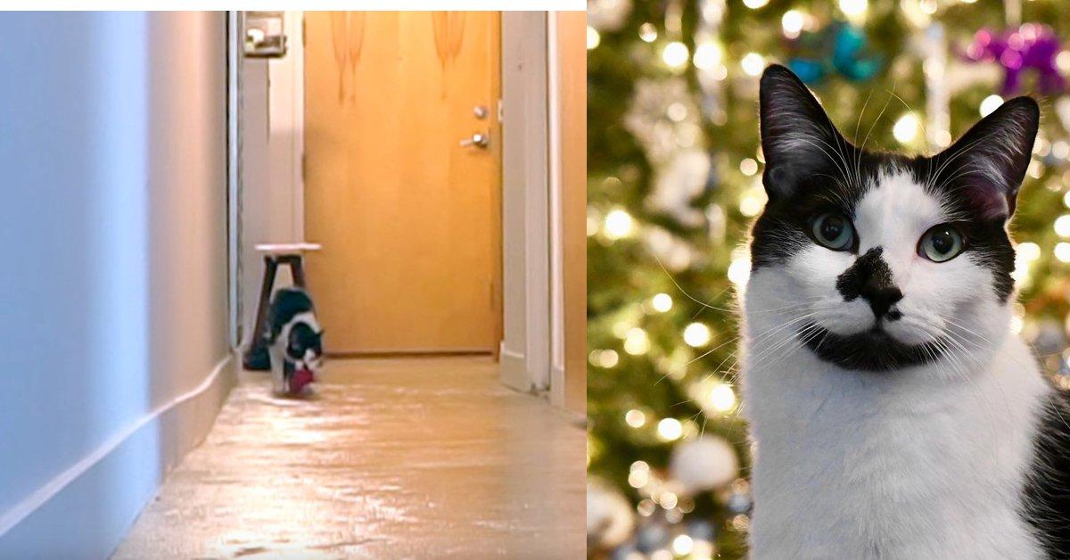Ecco cosa fa questo gatto quando il padrone è fuori casa. VIDEO
