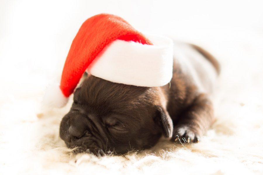 idee-regalo-natale-cani