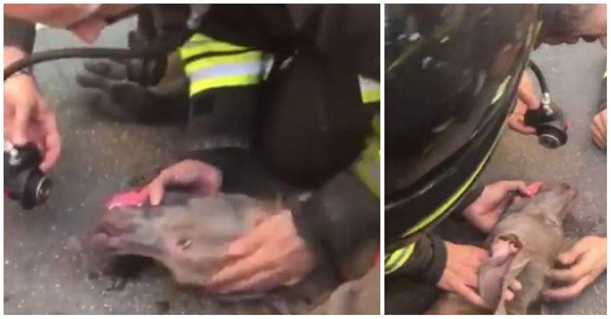 incendio-milano-pompieri-salvano-cane
