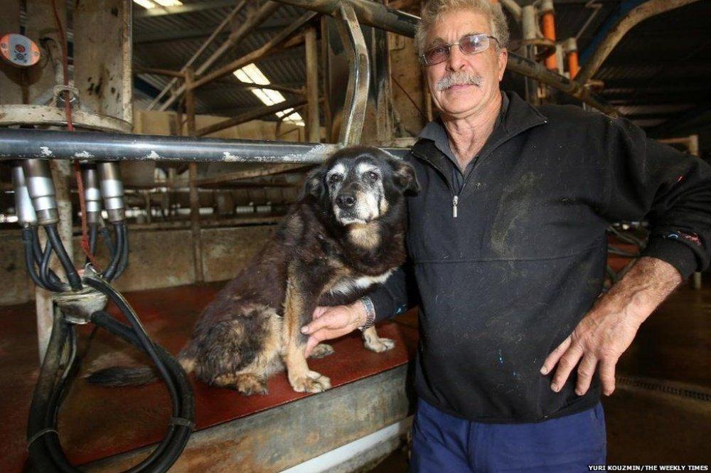 Maggie, il cane che ha vissuto più a lungo