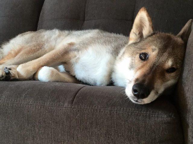 mura-divano