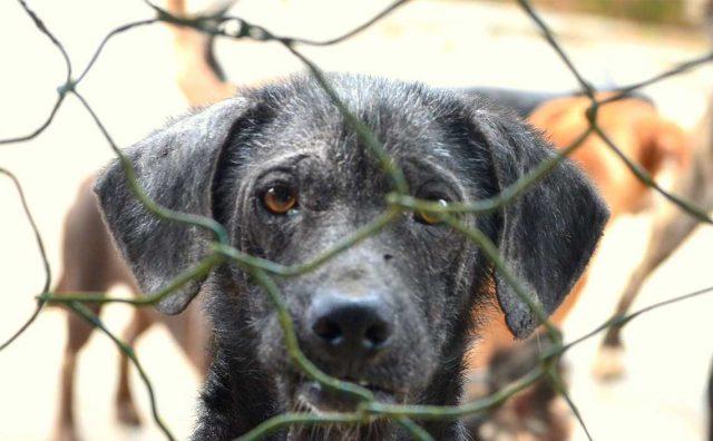 i-cani-liberati-nel-canile-clandestino 3