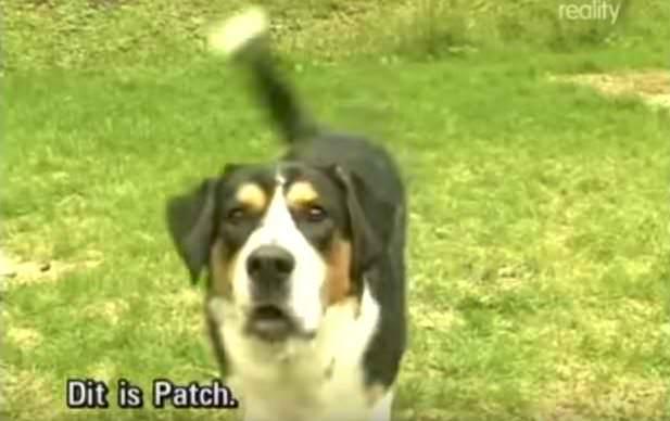 Patch-riesce-a-salvare-la-vita-della-sua-amica-umana 2
