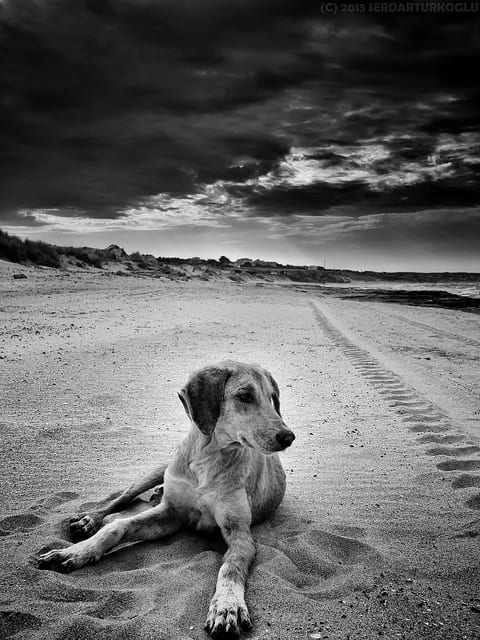 morte di un cane