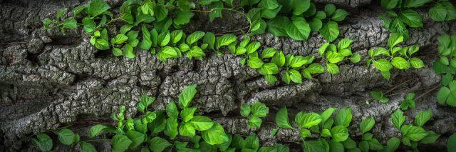 piante-tumore
