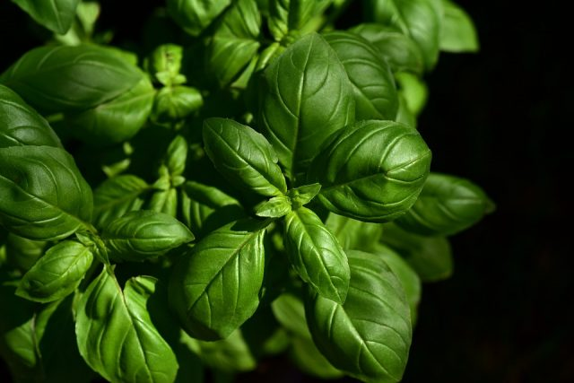 piante-tumori-vantaggi