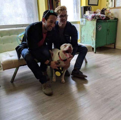 pitbull-adottato
