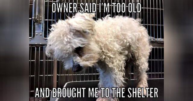 il-triste-abbandono-di-Puppy