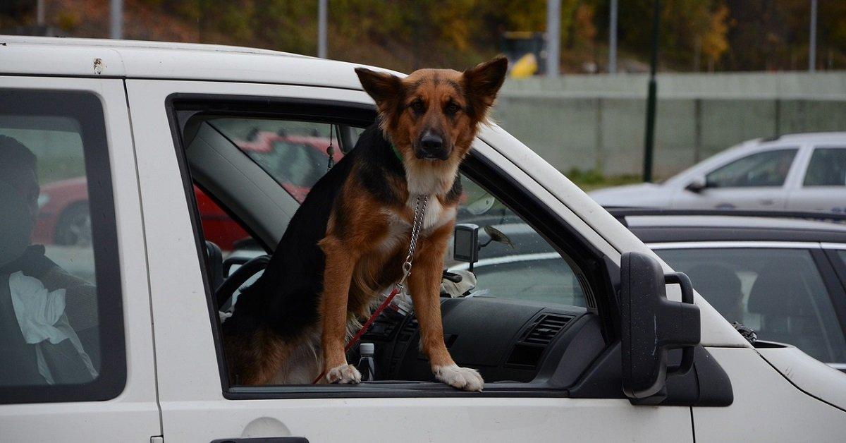 lendinara-cane-salva-proprietario