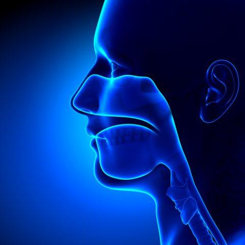 seni-nasali