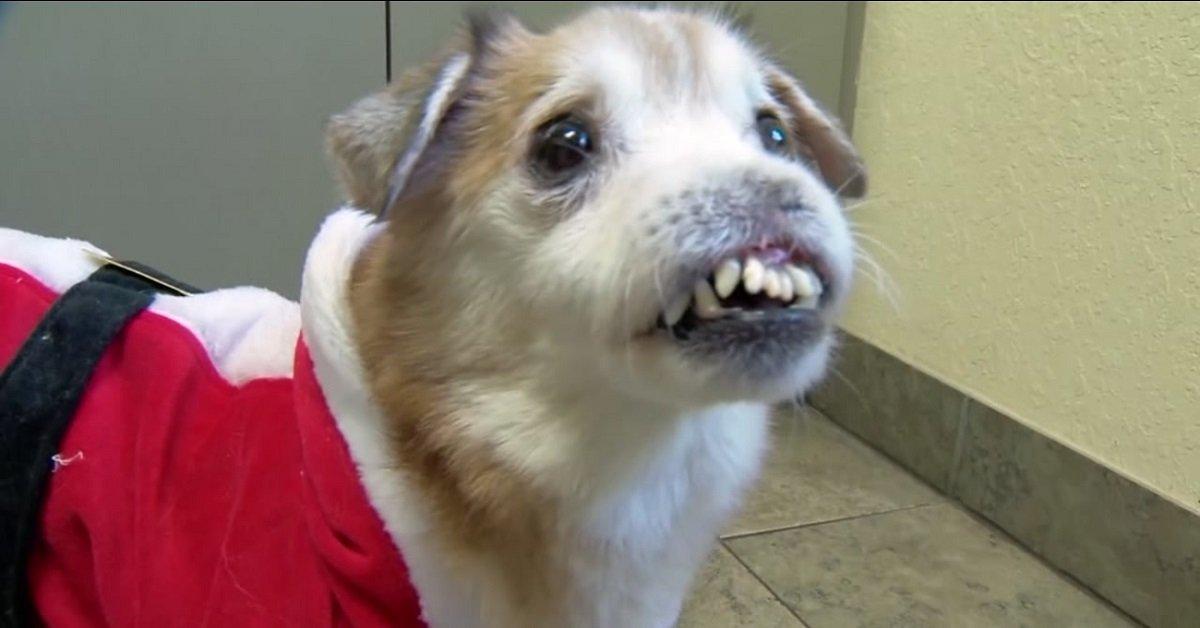 sniffles-il-cane-senza-naso