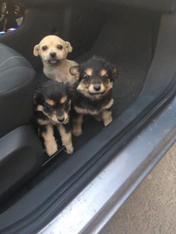 la-storia-dei-tre-cuccioli-abbandonati 1