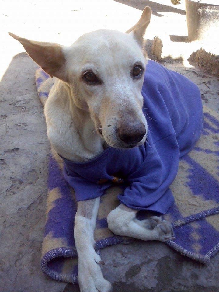 Cane disabile abbandonato in strada, ha poi avuto una vita da sogno
