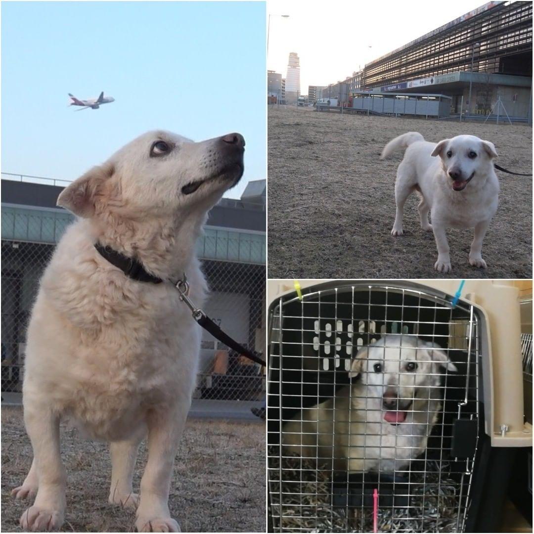 Abbandonato al freddo e cieco in Romania, cane trova una casa negli Stati Uniti
