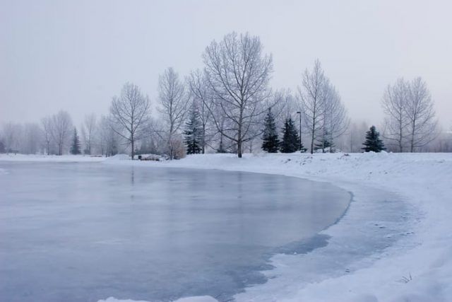 Ryan-l'autista-che-ha-salvato-il-cane-intrappolato-nel-lago-ghiacciato 1