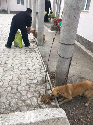 il-salvataggio-dei-18-cani 4