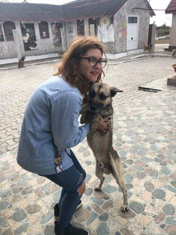 il-salvataggio-dei-18-cani3